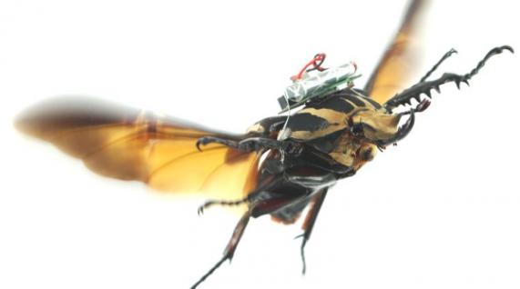 beetle-biobot